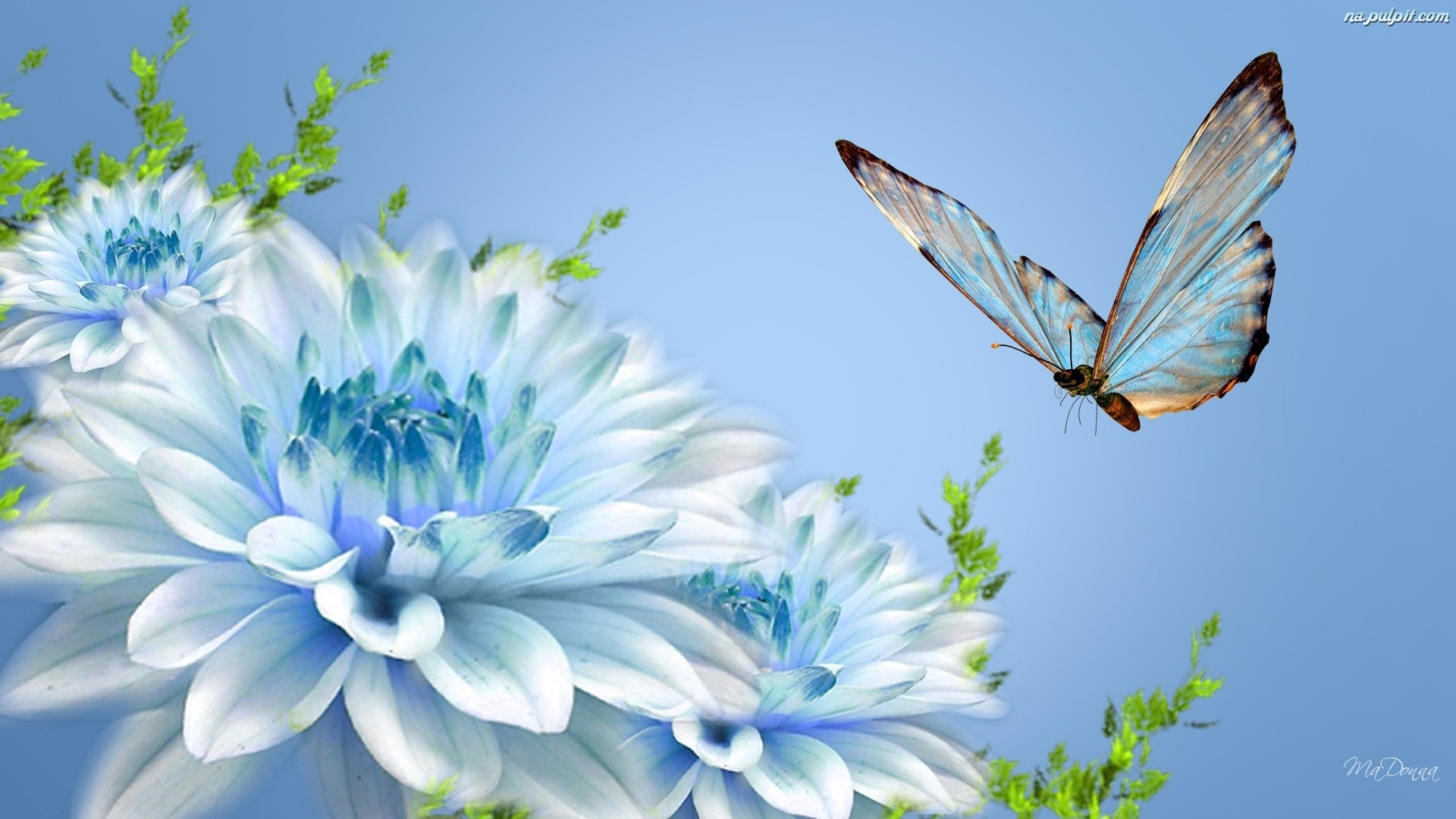 Blue Butterfly and Flowers